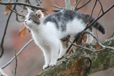 https://pixabay.com/en/cat-tree-cat-in-a-tree-small-cat-1249973/