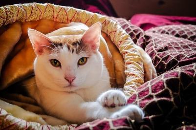 https://pixabay.com/en/cat-purr-kitten-pet-fur-feline-1513184/