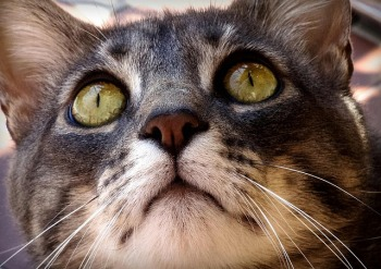 cat-2949922_640