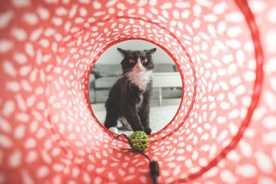 https://pixabay.com/en/cat-play-toy-cute-domestic-animal-932846/