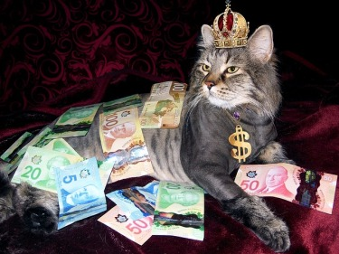https://pixabay.com/en/money-cat-wealth-canadian-money-1144553/