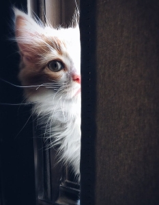 https://www.pexels.com/photo/adorable-animal-cat-close-up-320014/