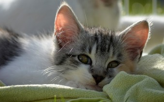 https://pixabay.com/photos/love-sleep-tired-kitten-sweet-cat-2847463/