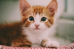 adorable-animal-photography-cat-1870376