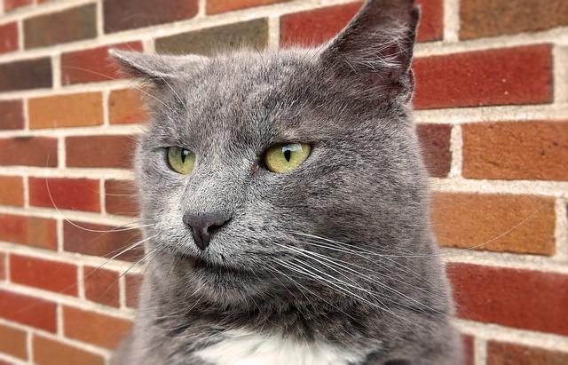cat-2483826_640