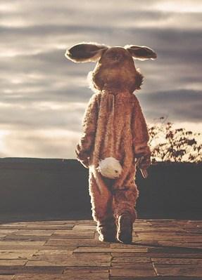 rabbit-542554_640