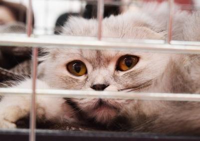shelter-cat-2754333_640