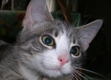 cat-1695918_640