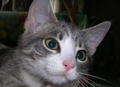 cat-1695918_640