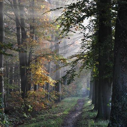 path-365541_640