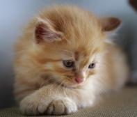 cat-3266671_640