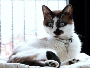 cat-3725031_640