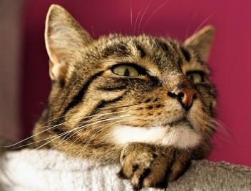 cat-4548572_640