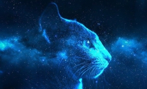 cat-stars