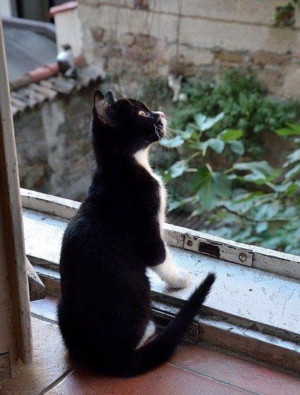 cat-1598975_640