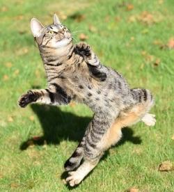 cat-1718842_640 (1)