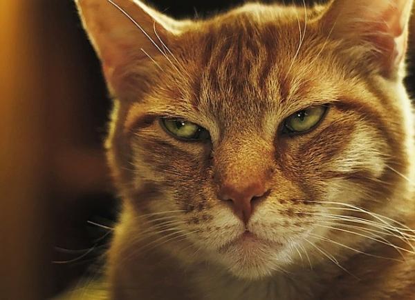 cat-3279125_640